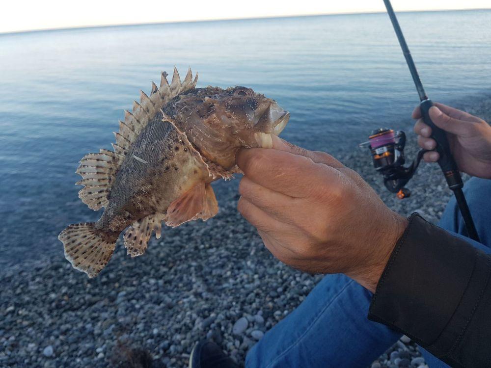 Скорпена – опасная рыбка