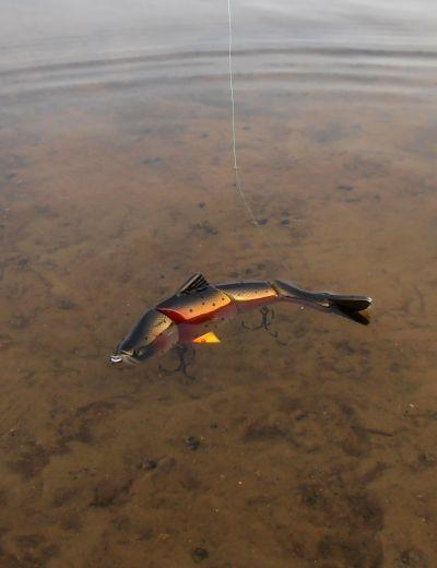 Плавающие многосоставные свимбейты без лопасти - страшная щукокосилка на мелководье
