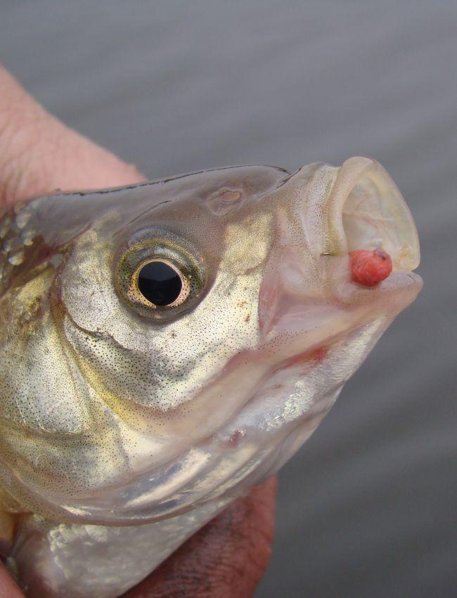 Моя практика: рыболовные крючки