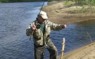 Ловля хищника на живца и мертвую рыбку. Часть 2