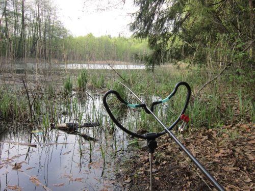 Карасей ловлю пикером даже в полностью заросших водоемах