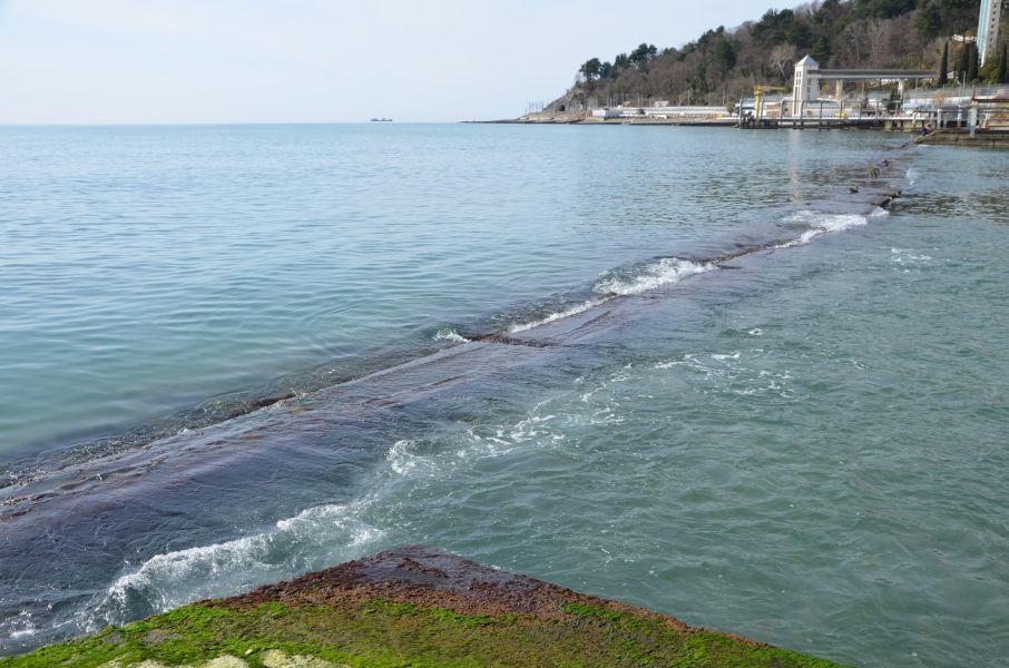 Идеальное состояние моря для ловли саргана