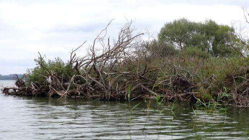 Перспективный для ловли судака коряжник возле берега