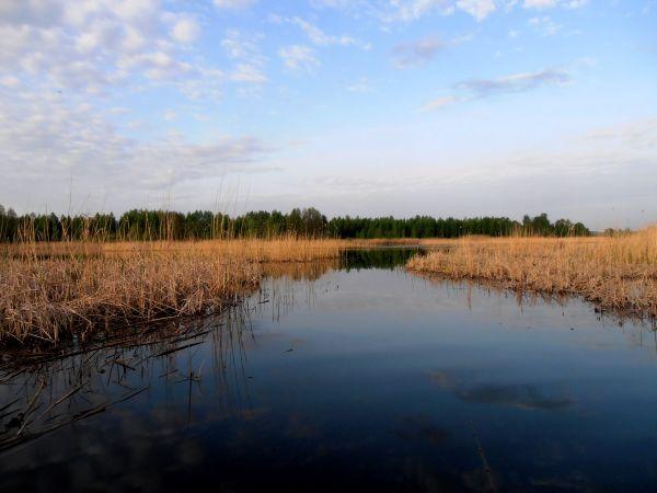 Характерная весенняя точка - мелководье и прошлогодний тростник