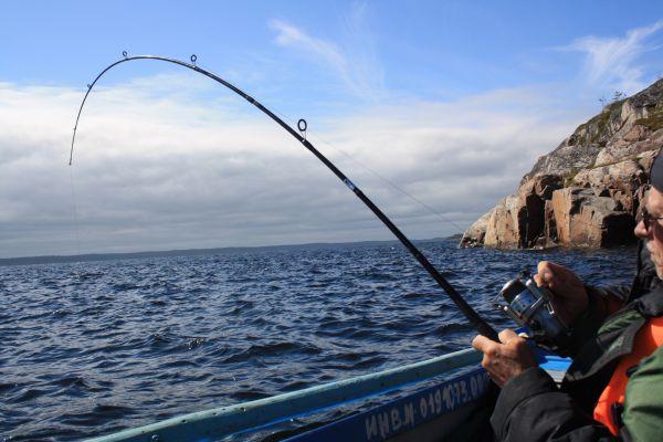 Спиннинг с тестом до 70 г в паре с катушкой размером 4000 вполне годится для прибрежной рыбалки