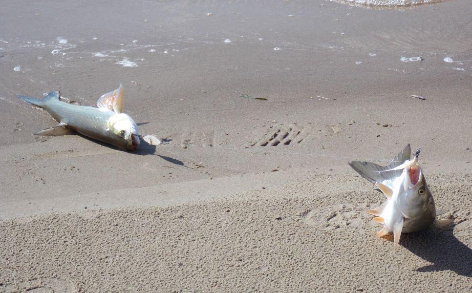 Тандем из приманок нередко приносит дуплет из рыб
