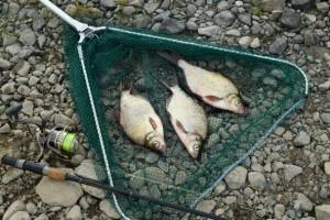 Как у нас на реке Онега ловят леща донкой ранней осенью