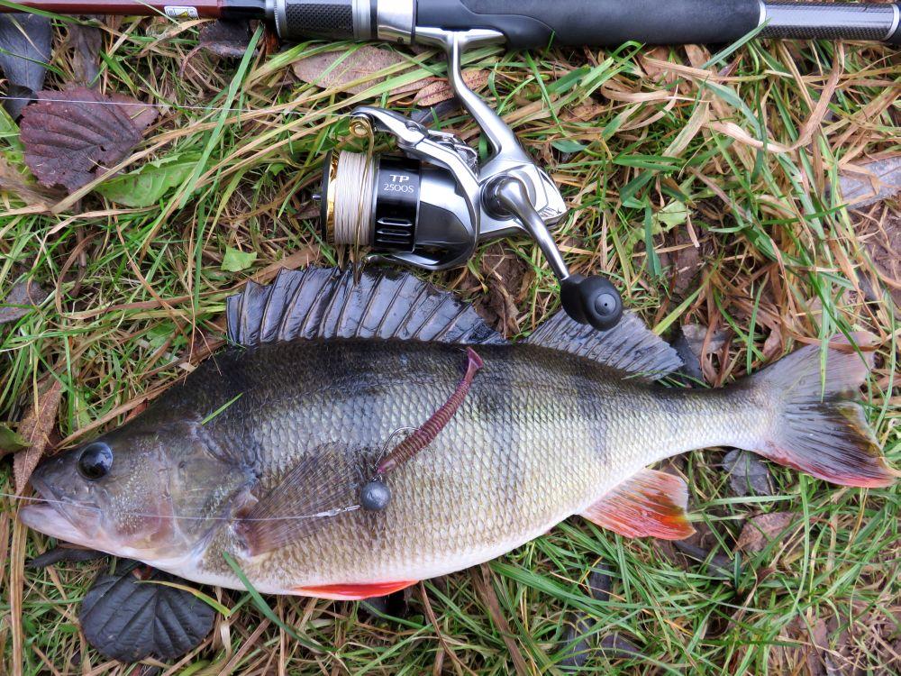 Фаворитом в сегодняшней рыбалке стал виброхвост Fetish 3 от Select фиолетового цвета