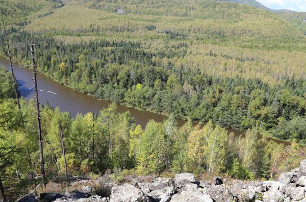 Берега таежных рек плотно одеты деревьями и кустами