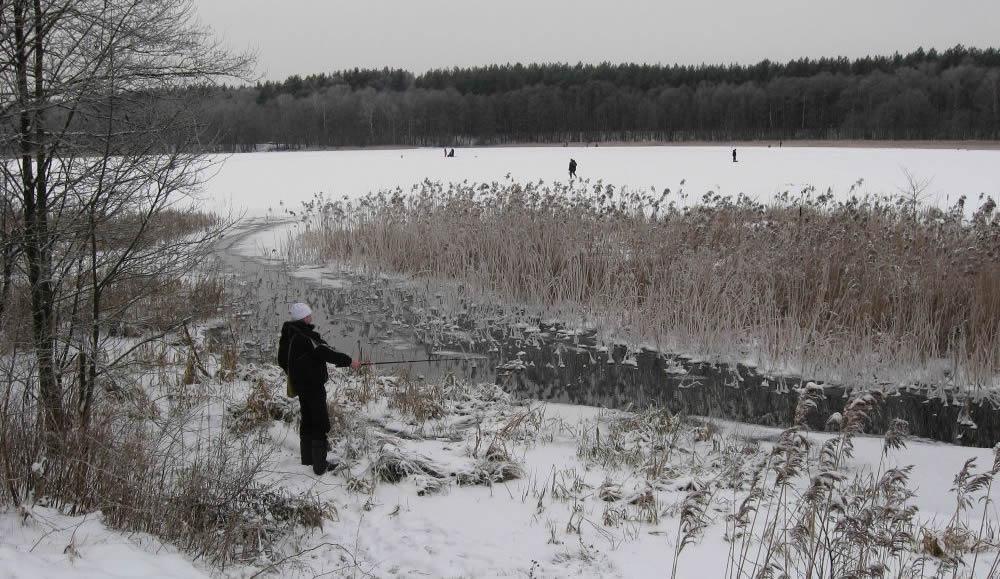 В предзимье за озерной плотвой