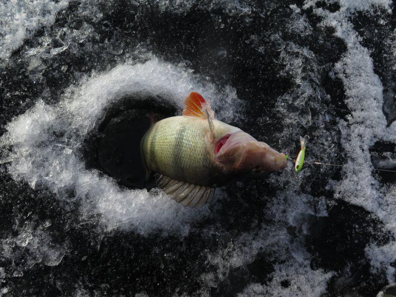Первая рыба на Usami Dansa