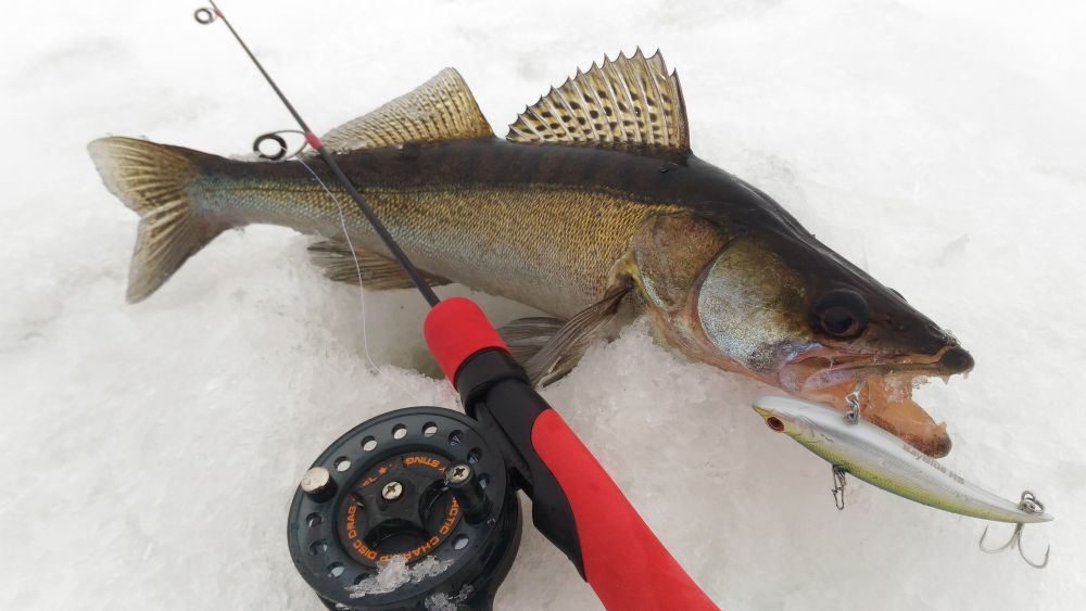 Если очень холодно – ловлю с катушкой Stinger Arctic Char XP