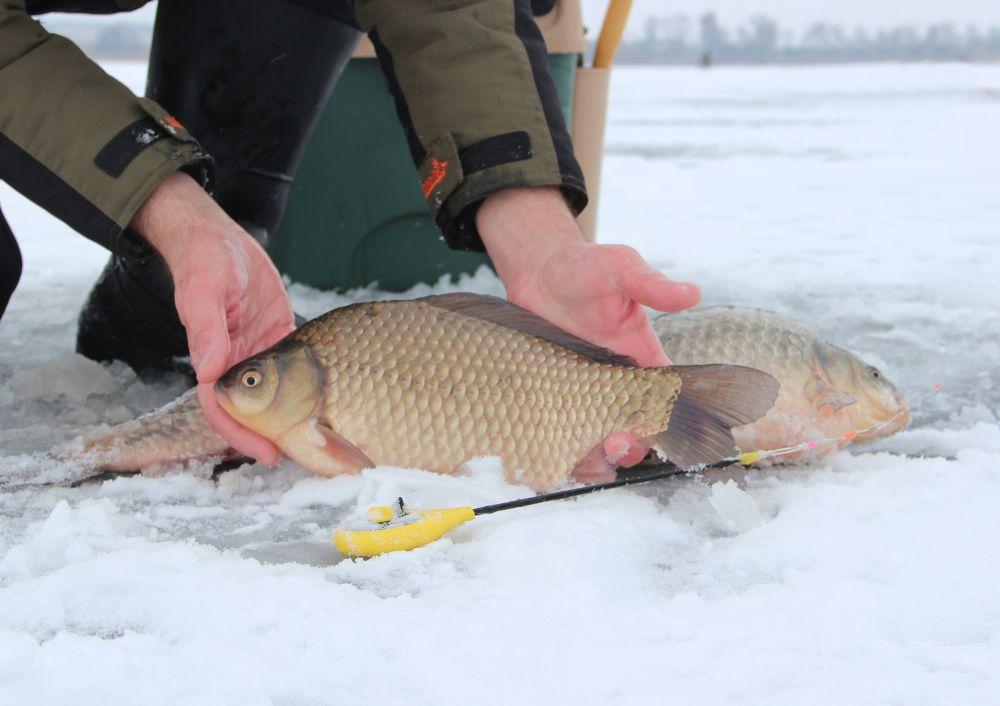 Секрет рыбалки на карася зимой