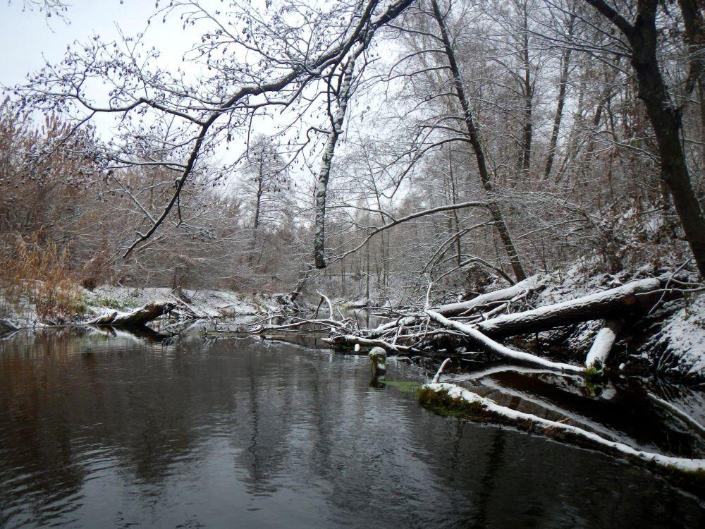 Деревья в воде лежат так густо, что на лодке с трудом проберешься