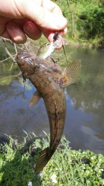 В день мне попадалось от трех до шести таких рыб