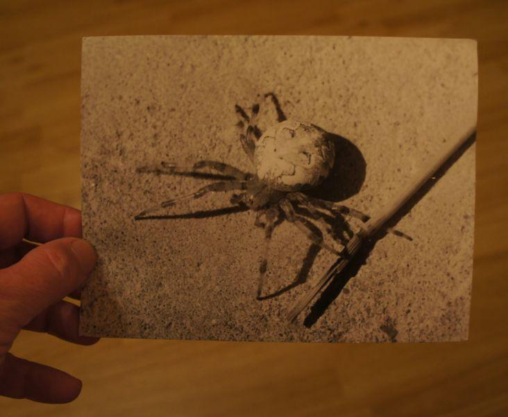 У Винса нашлось старое фото с тем самым уральским пауком