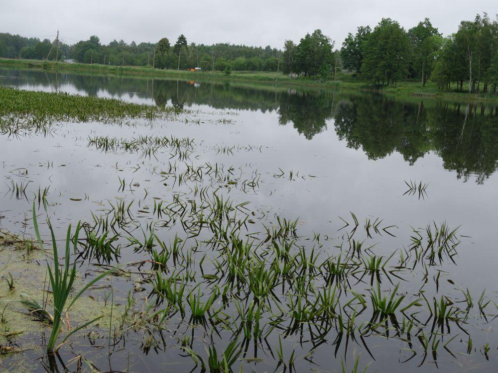 Матчевой удочкой я успешно ловлю в сильно заросших травой мелководных озерах
