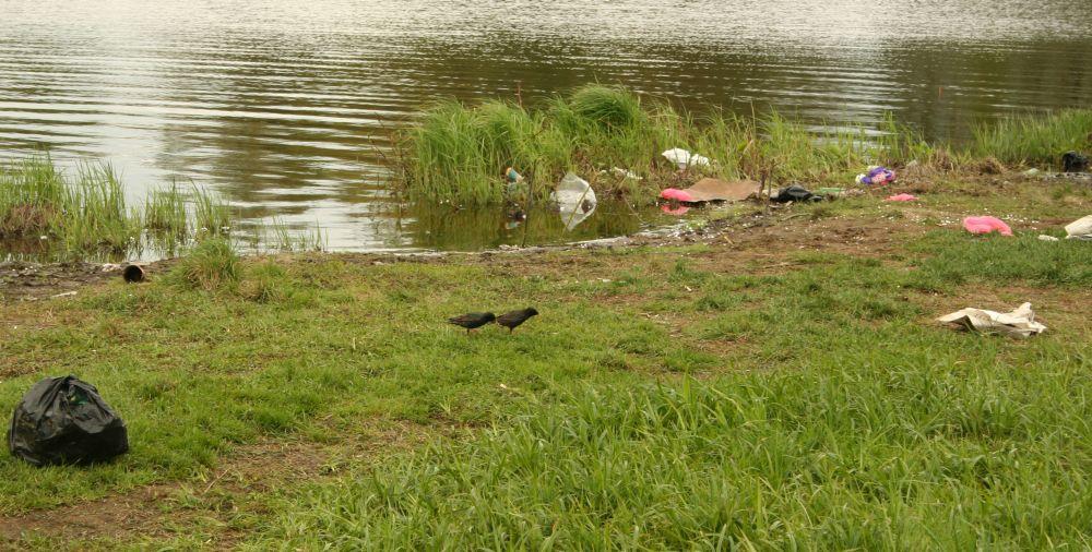 На Ладоге, где можно выйти на берег, обычно чудовищно грязно