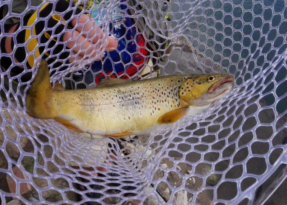 Силиконовый подсачек - важный аксессуар форелевой рыбалки