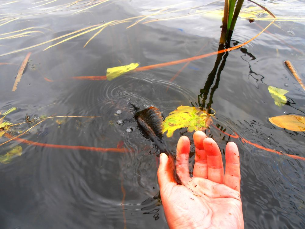 Отнимать у рыбы жизнь - просто невыносимо, да и несправедливо