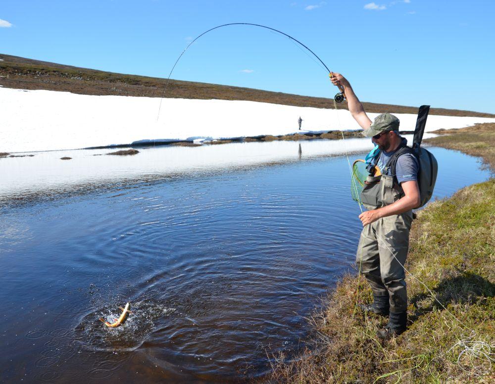 Когда краснопузый красавец заходит в ручьи, его ловля сильно упрощается