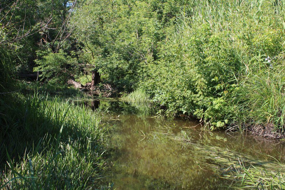 Во второй половине лета на микроречках пышно разрастается водная растительность