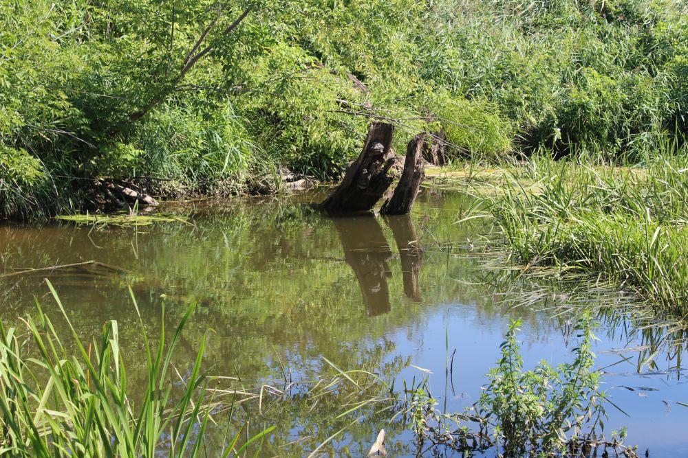 На ямах голавль встречается как утром, так и в полдень