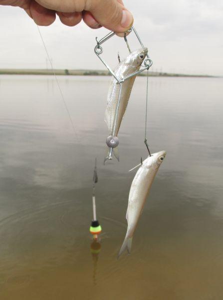 Днём технопланктон атакует рыбья мелочь – и при подсечке может оказаться на крючке