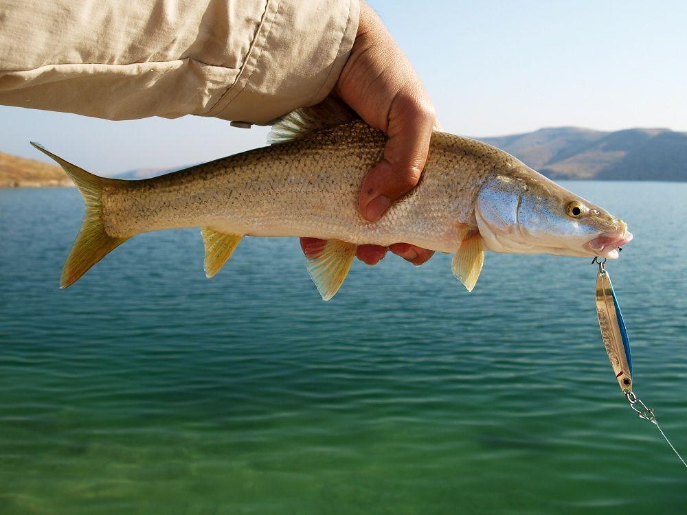Символично, что моей первой рыбой Евфрата, Турции и Азии вообще оказался мангар, хоть и маленький