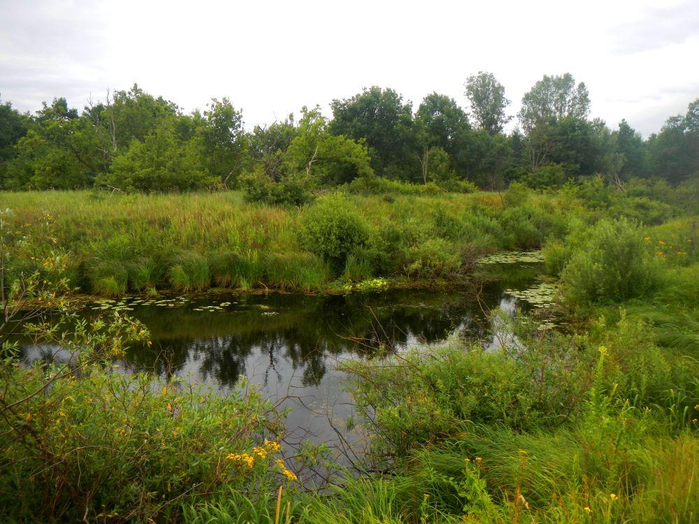 В таких маленьких озерах щуки порой выедают «бель» подчистую и кидаются на любую приманку