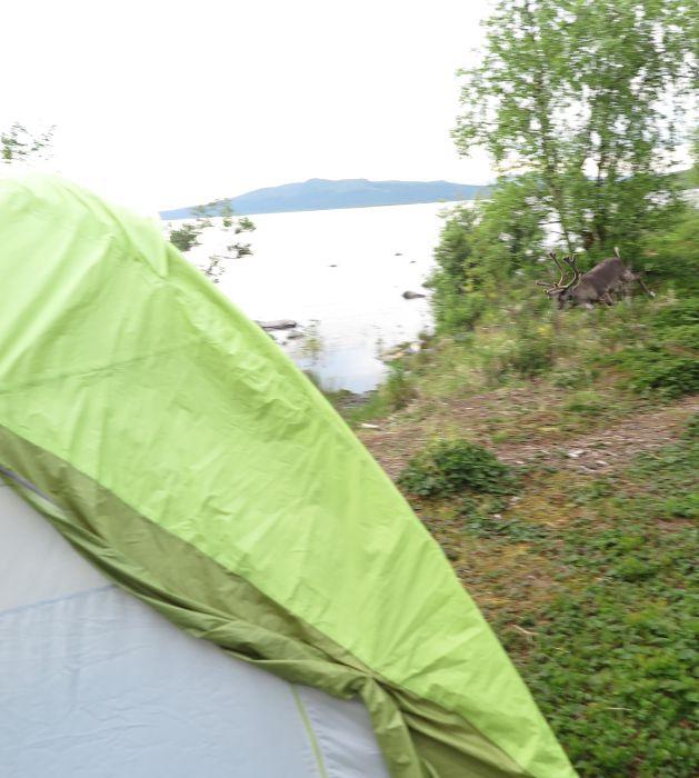 Если б мы не обращали внимание на оленей, они бы к нам в палатку забрались