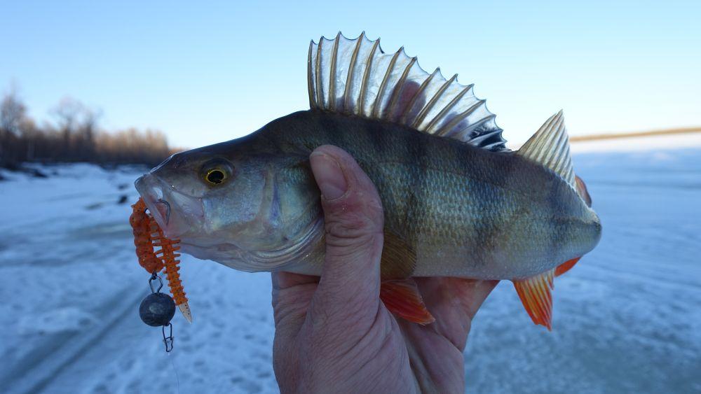 На «резину» рыба клевала не только в корягах, но и рядом