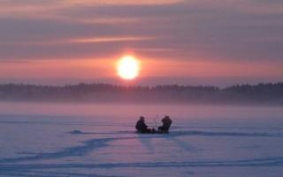 Зимняя активность окуня