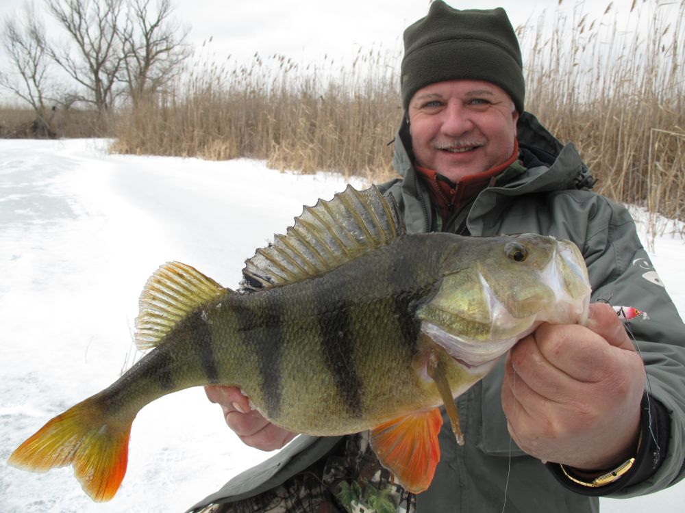 Балансир собирает активную рыбу