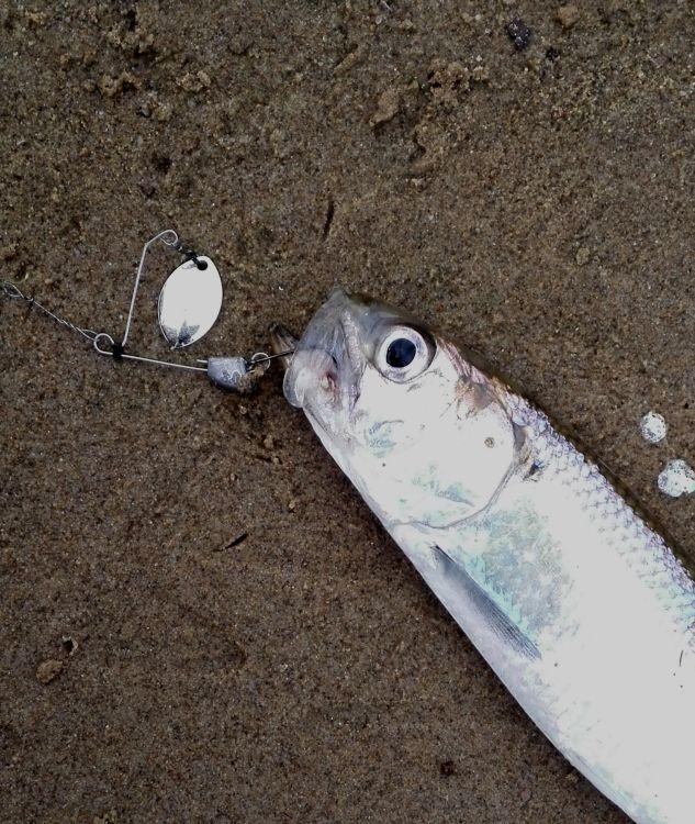 Самая разнообразная рыба попадается на джиг-спиннеры