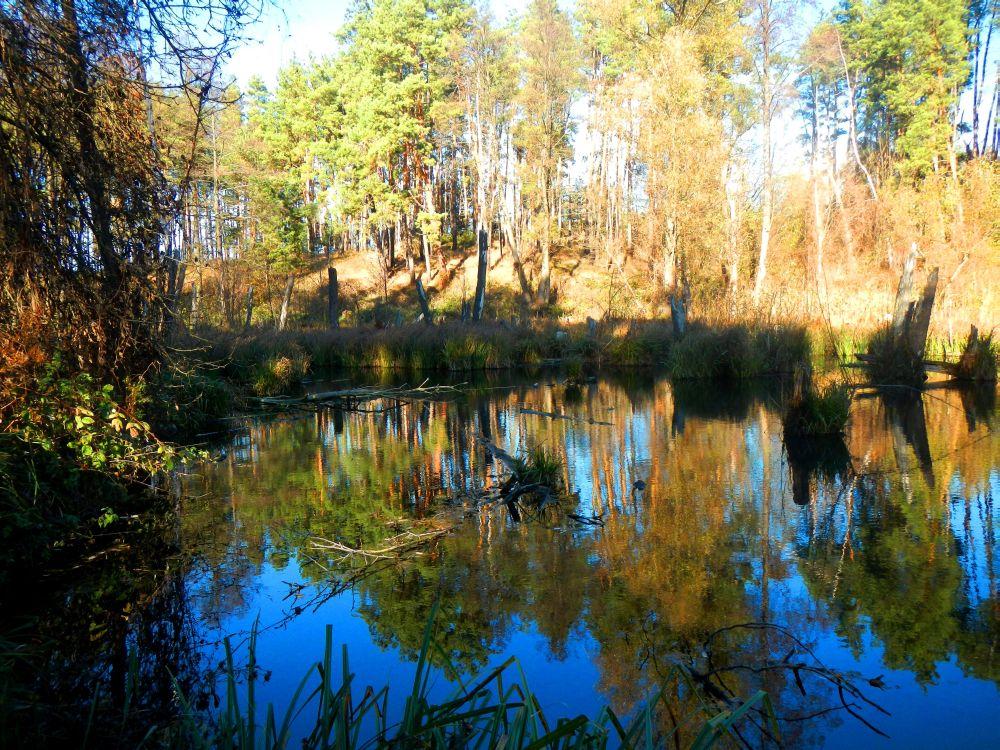 Глубина 1,5 м и сплошные завалы на дне - характерное место, где держится самая крупная щука в моём озере