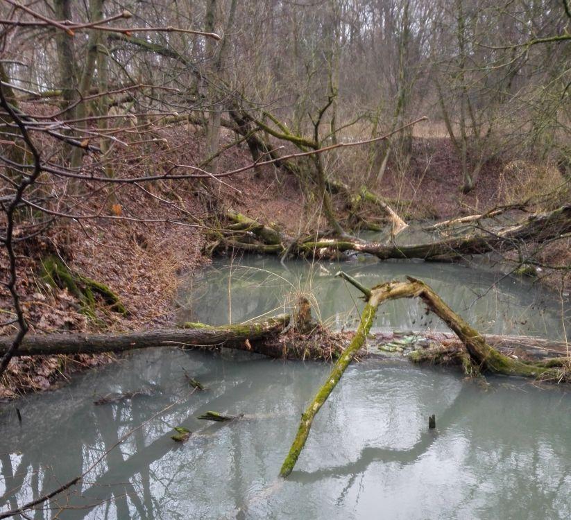 Пусть и не Мексика, но такие завалы на наших речках населены щукой