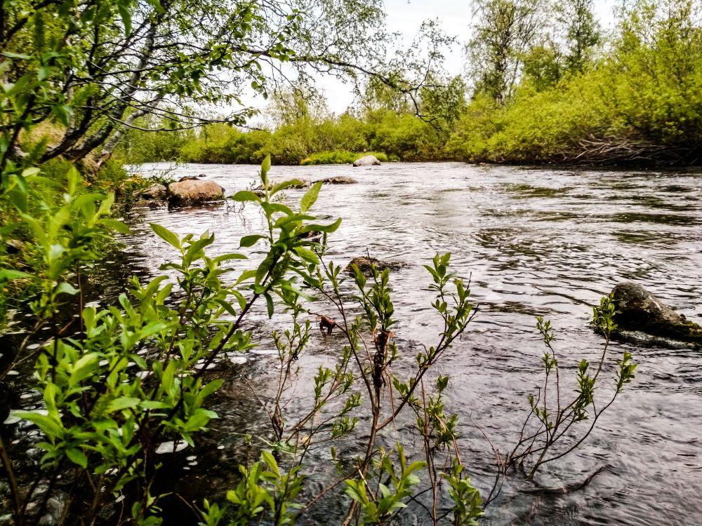 В июне кумжевые реки Мурмана особенно живописны