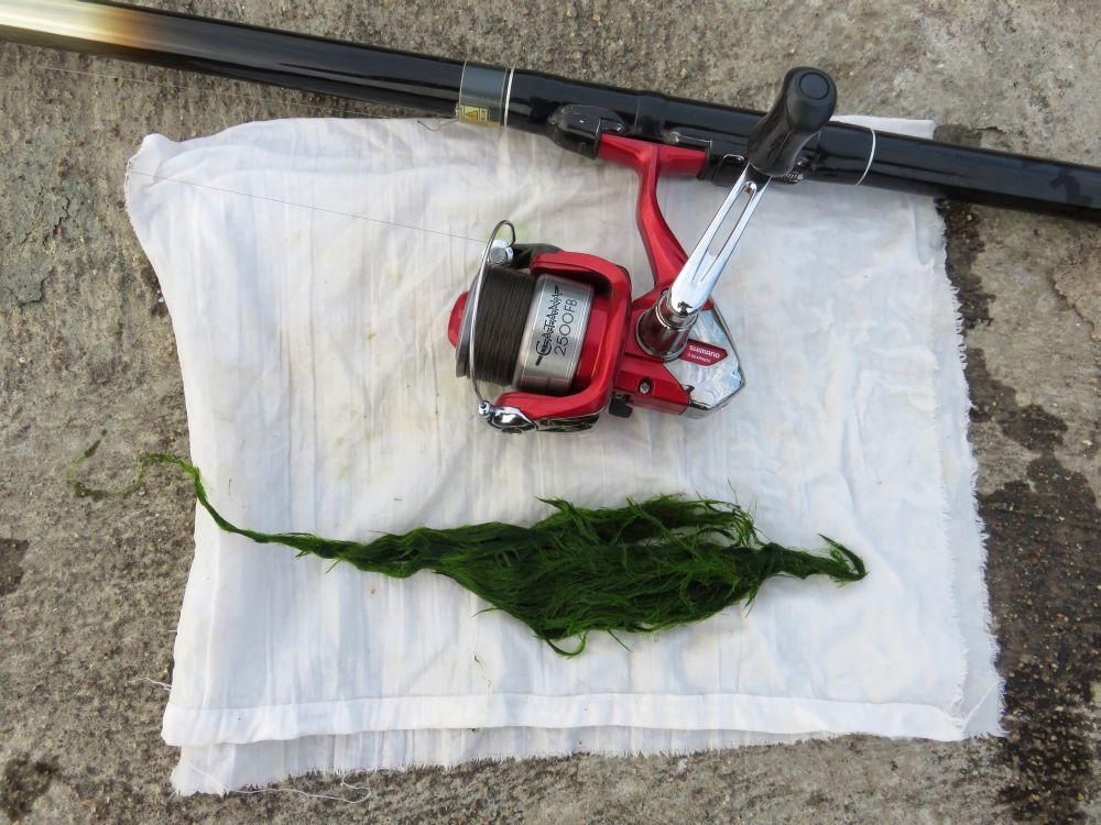 Этого запаса зелени хватит не на одну рыбалку