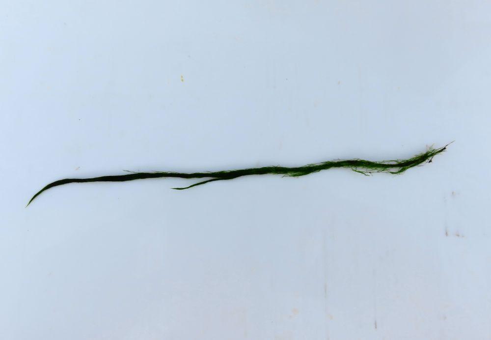 Как насадить зелень на крючок (а)