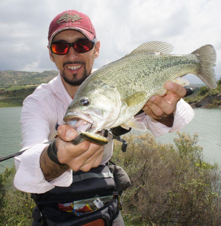 Басс — одна из самых «ритмичных» рыб