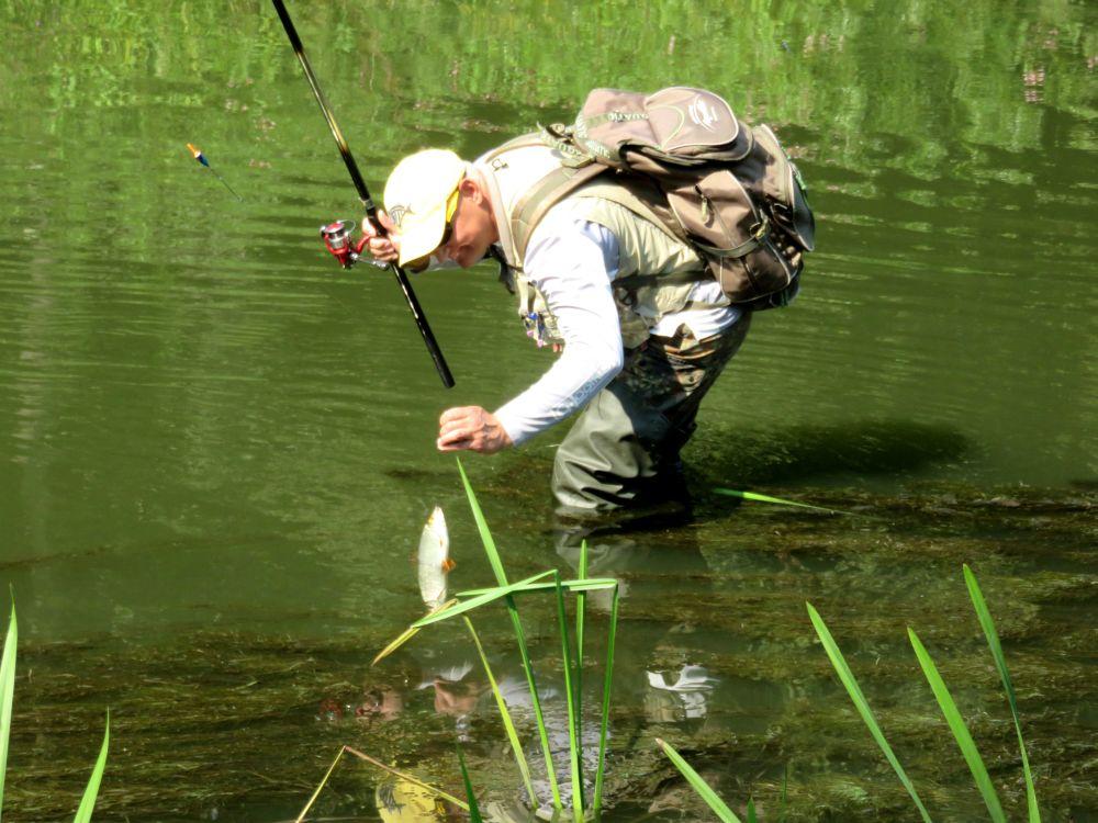Прежде чем брать рыбу, даю ей успокоиться
