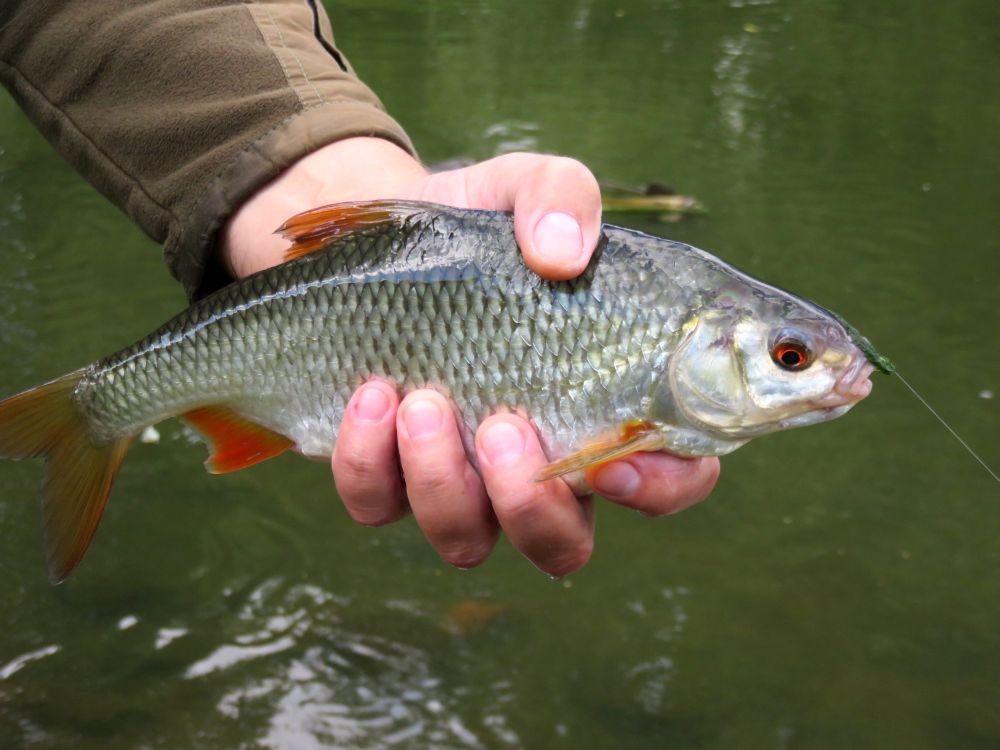 Больше насадка - крупнее рыба