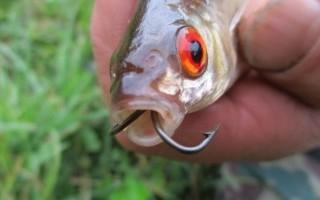 Белый стоп-сигнал рыболовного кружка