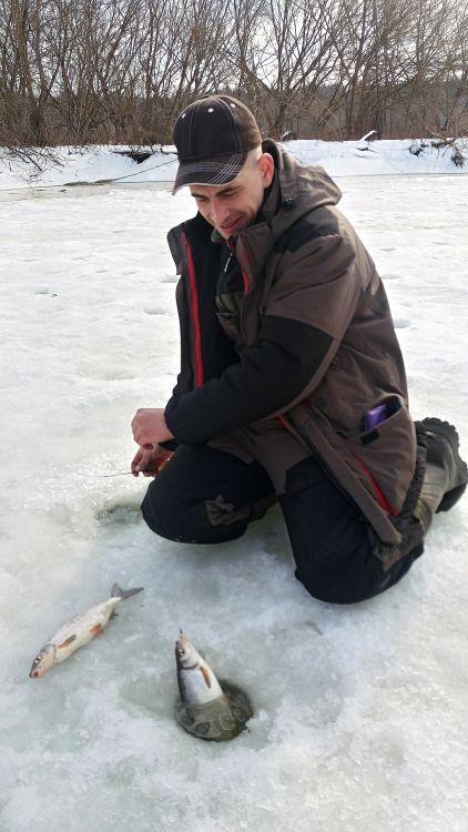 Зимой сырти периодически заходят в «спокойную» воду