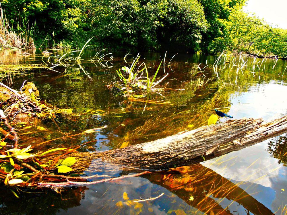 Вода в речке настолько прозрачна, что приманки предпочтительны приглушенных натуральных тонов