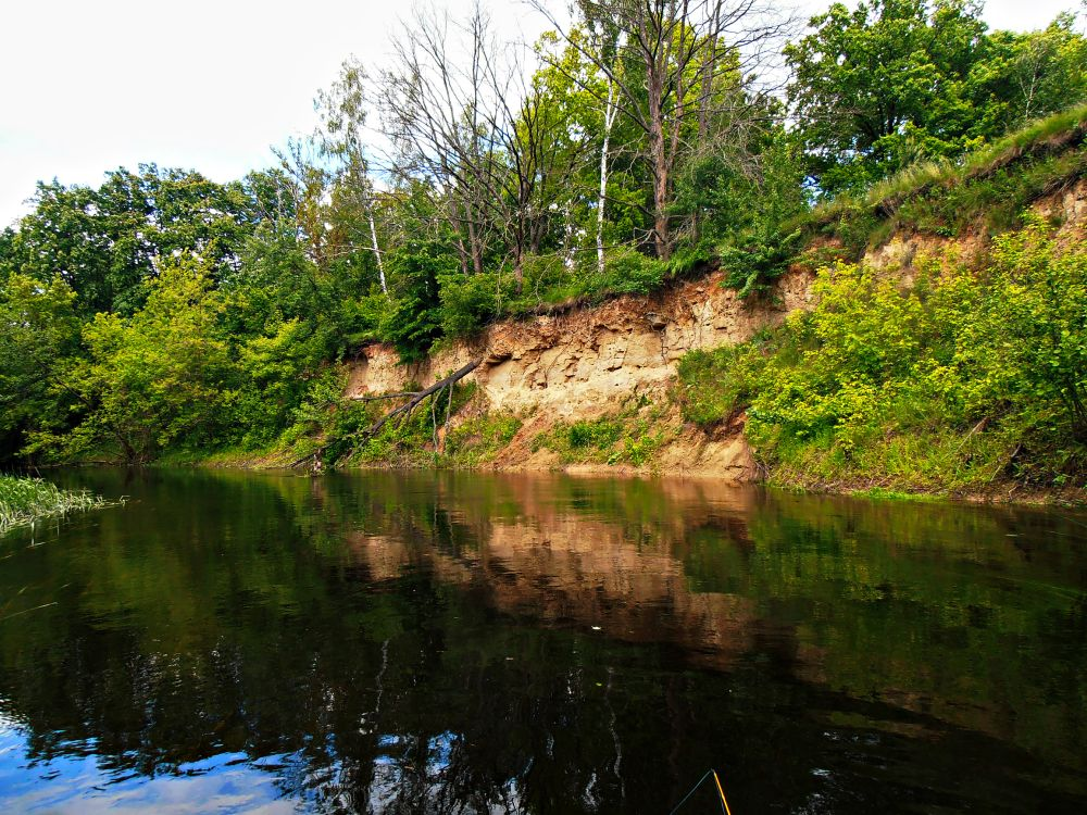 С обрыва ежегодно в воду падают деревья, создавая на повороте новые завалы