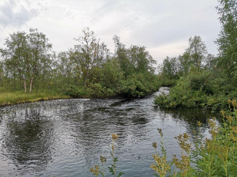 Под высокой водой подразумевается уровень реки в верхней границе русла