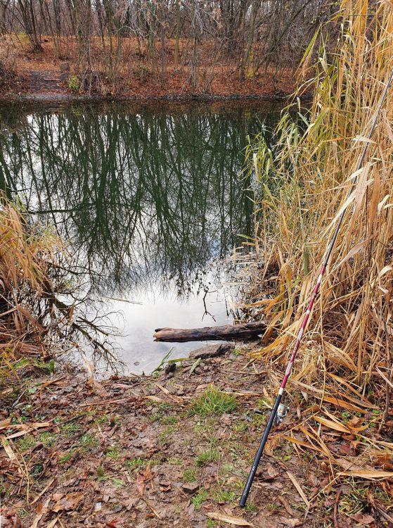 Для ловли нужно искать место с медленным течением