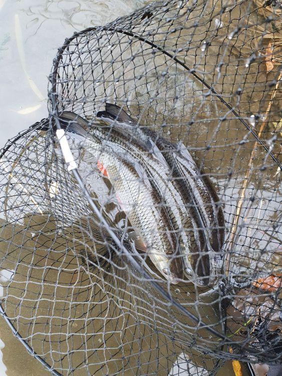 Хороший задел тогдашней рыбалки